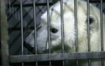 Зоозащитные организации настаивают на необходимости проверки документов на краснокнижных животных, эксплуатируемых в цирке в Автово