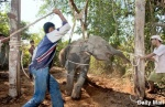 Смертельные катания на слонах, или Слоны наносят ответный удар