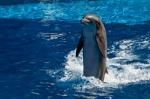 Мексика                      запретила передвижные дельфинарии