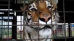 Шотландия за запрет цирка с животными