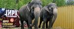 Дети артистов цирка «Шоу слонов-великанов»: «Нам жалко животных. Некоторые из них даже умирают»