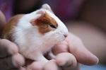 Учёные мира  признали эксперименты на животных ненаучными