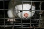 Нидерланды подтвердили запрет производства меха