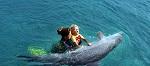 Дельфины - не целители. Дельфинотерапия - миф