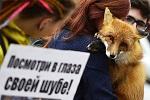 Поможем защитить животных вместе!