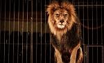 В Нидерландах вступил в силу запрет на использование диких животных в цирке