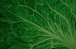 >Позиция Академии питания и диетологии 2016: Вегетарианское, веганское питание