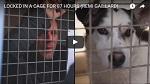 >Реми Гайяр вызвал невероятную волну солидарности с Обществом защиты животных | ВИДЕО