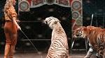 Горсовет оставит Нью-Йорк без цирка