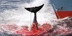 >Япония: нет истреблению китов! Считанные часы до принятия решения