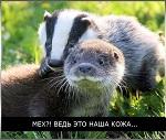 >Поддержи социальный проект «Животные – не одежда!» в Вологде!