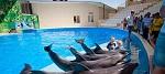 >В Самаре строят дельфинарий. Общественность готовит петицию. Комментарий ВИТЫ