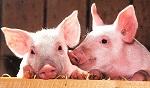 >Правительство Великобритании обещает признать животных разумными