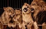 >В Шотландии запретили цирки-шапито с дикими животными