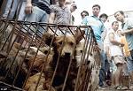 >«Фестиваль» собачьего мяса в Юйлине: А будет ли запрет?