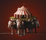 Победа! Италия стала 41-й страной мира, запретившей эксплуатацию животных в цирках