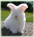 >Победа! РЕТА убедила BCBG Max Azria и BCBGeneration запретить использовать натуральный мех и мех ангорских кроликов | ВИДЕО