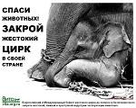>Карсон и Барнс рассматривает возможность убрать слонов из цирков