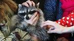 >Запретить контактные зоопарки – объекты пожарной опасности в торговых центрах