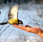 >Стоят морозы и сугробы. Подкормите птиц!