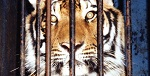 >Великобритания запретит цирк с животными к 2020 году