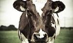 >Фермеры просят Министерство сельского хозяйства США определить термин «говядина»