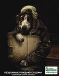>Конвейер боли для собак и людей. Интервью Ирины Новожиловой сайту Активатика