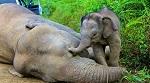 >Китай официально запретил добывать и продавать слоновую кость