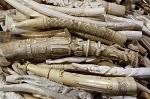Китай официально запретил добывать и продавать слоновую кость