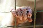 >Газовая камера для обезьян: немецкие автопроизводители осуждают использование приматов в исследовании дизельных выхлопов