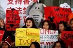 >Гонконг последовал примеру соседей и запретил торговлю слоновой костью