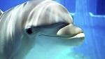>23 июля - Всемирный день китов и дельфинов