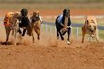 >Штат Флорида запрещает собачьи бега. Запрет спасет тысячи собак