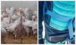 >Инновационное биоразлагаемое волокно заменит птичье перо и пух в одежде (ВИДЕО)