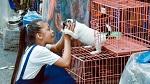 >Ханой станет первым вьетнамским городом, в котором будет запрещена продажа собачьего мяса