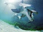 >ПОБЕДА! Челябинск убрал из планов строительство дельфинария по настоянию общественности
