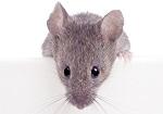 >400 000 животных убивают ежегодно ради тестирования ботокса