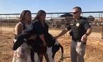>За спасение живого теленка из скотомогильника активисты-вега́ны обвиняются в уголовном преступлении