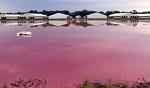 >Мясной гигант Smithfield оштрафован на 473 млн долларов за отравление жителей Северной Каролины