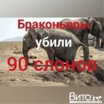 >90 слонов убиты охотниками в Ботсване