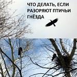 >ЧТО ДЕЛАТЬ, ЕСЛИ РАЗОРЯЮТ ПТИЧЬИ ГНЁЗДА