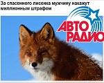 >Авторадио. Житель Камчатки спас лисенка, за что может поплатиться штрафом в 1 млн.руб. Комментарий ВИТЫ - ВИДЕО