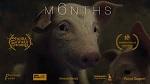 >Премьера фильма-победителя M6NTHS (6 месяцев) о жизни поросёнка - к началу года Свиньи