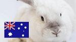 Австралия запретила тестирование косметики на животных