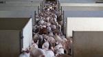 >Верховный суд оставил запрет фуа-гра в Калифорнии в силе