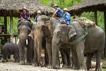 >Таиланд разрешит продажу слонов за рубеж