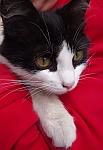Кошка, спасённая из подвала