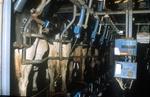 Механическое доение коров
