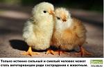 Цыплята любят веганов. Будь веганом - спаси жизнь