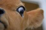 Всемирный день памяти животных - жертв мясной промышленности. Ежегодно 65 миллиардов живых существ люди убивают на мясо